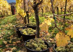 2-0-1-viticulture